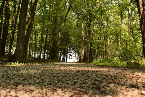 ohio forest woods