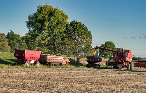 ohio  america  soybean harvest