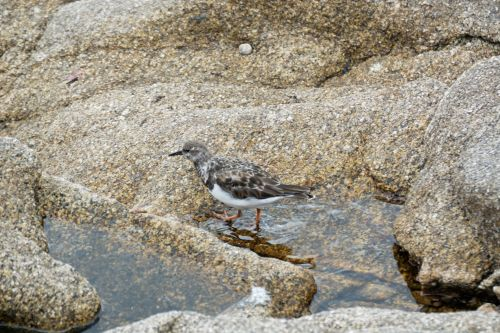 Bird In A Puddle