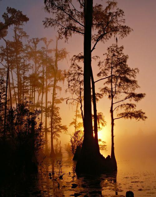 okefenokee swamp georgia florida