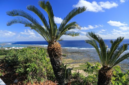 okinawa blue sea cycas