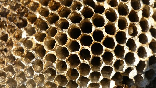 old  honey comb  bees