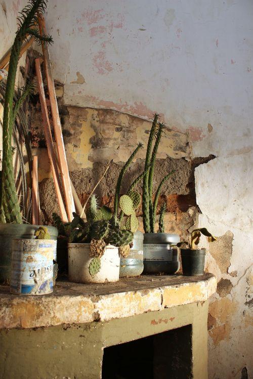 old plants plant