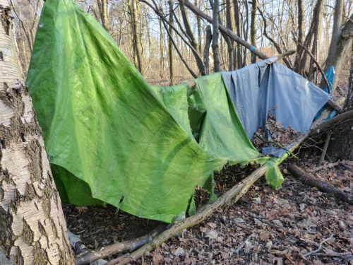 old tent forest
