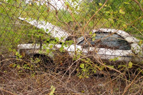 Old Abandoned Car In Weeds