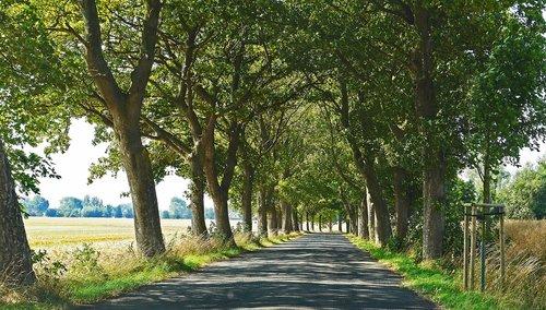 old avenue  road  rügen