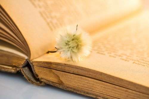 old book small dandelion faded