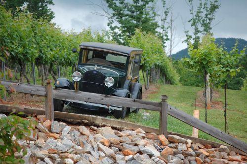 old car grapevine landscape