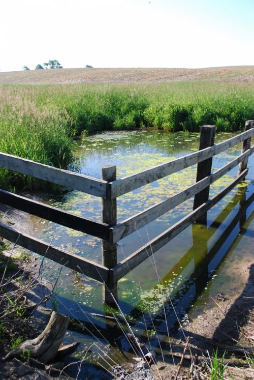 Old Fence In A Marsh