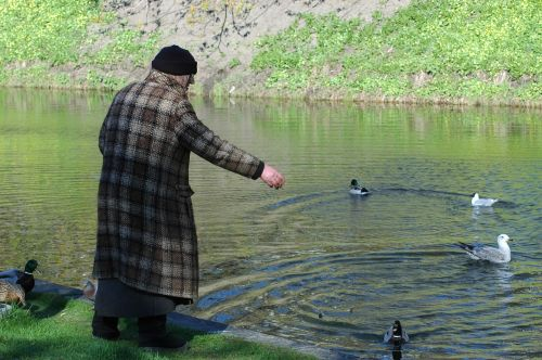 old lady feeding ducks senior citizen
