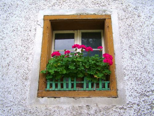 old window,geranium old window,old house,flowers