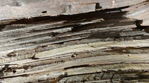 old wood fibers grain