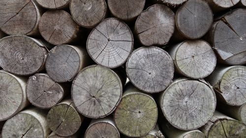 old wood stack annual rings