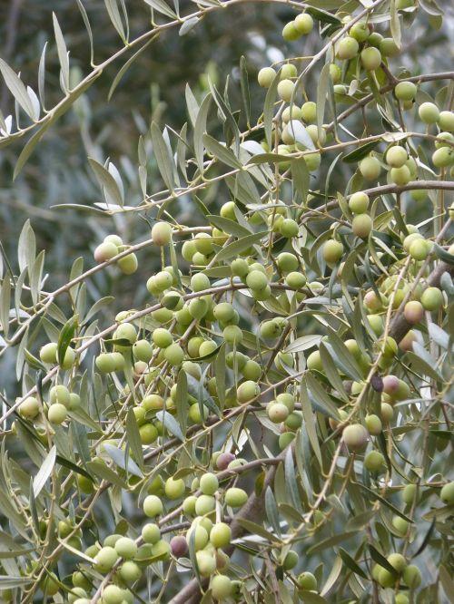 olive olives loaded
