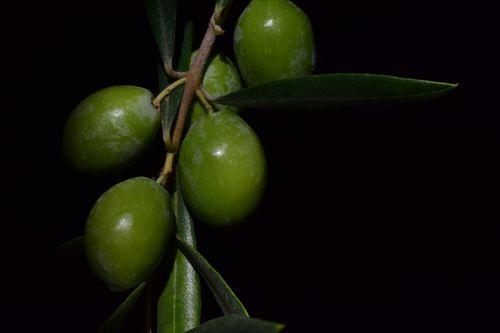 olive nocellara nocellara olive