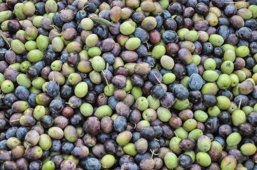 olives green olives black olives