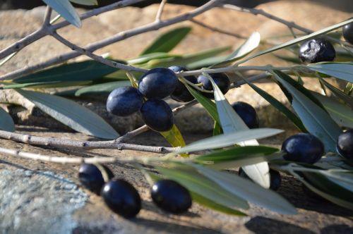 olives olives black olivier