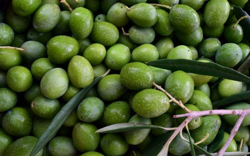 olives green ripe