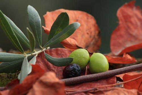 olives  organic  black olives