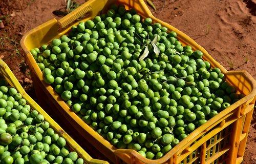 olives  green  green olives