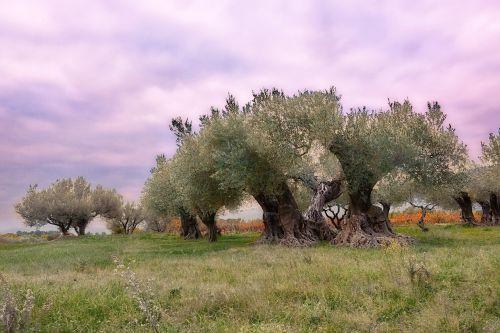 olivier provence france