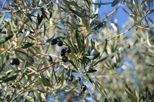 olivier olives black olives