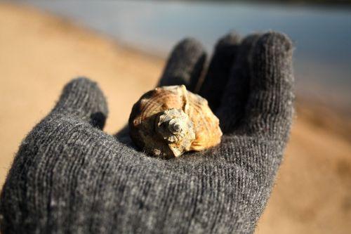 on the palm sink seashells