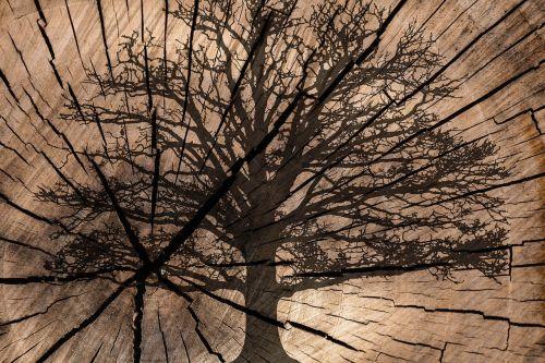 on wood tree rings tree