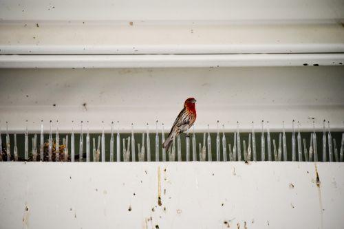 One Nesting Robin