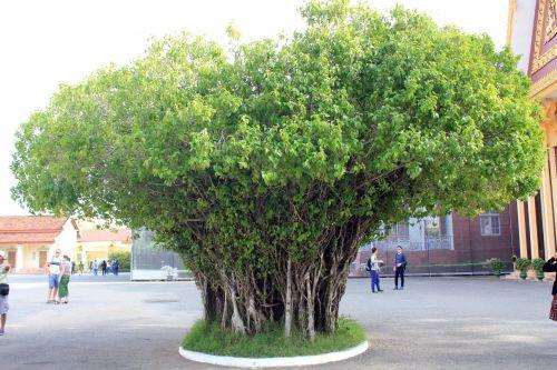 One Tree