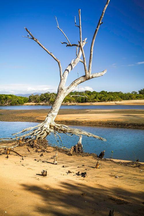 one tree mangrove area rope swing