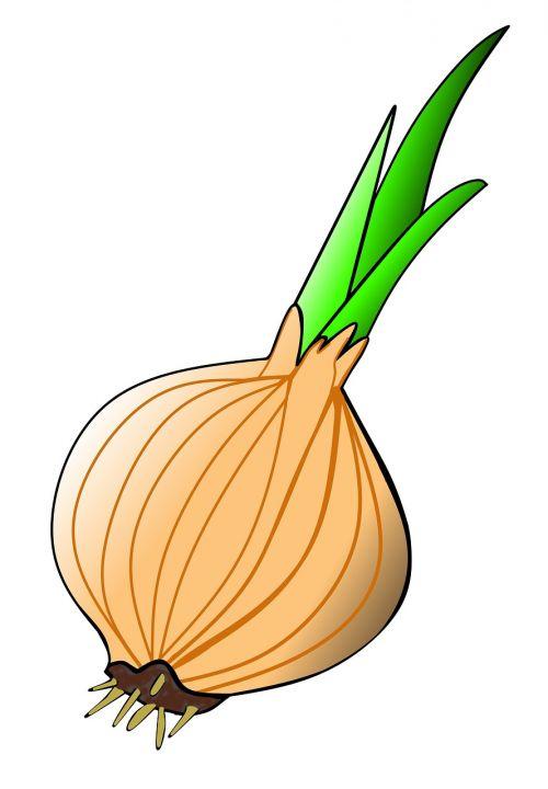 onion plant spring