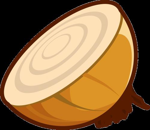onion cut fresh