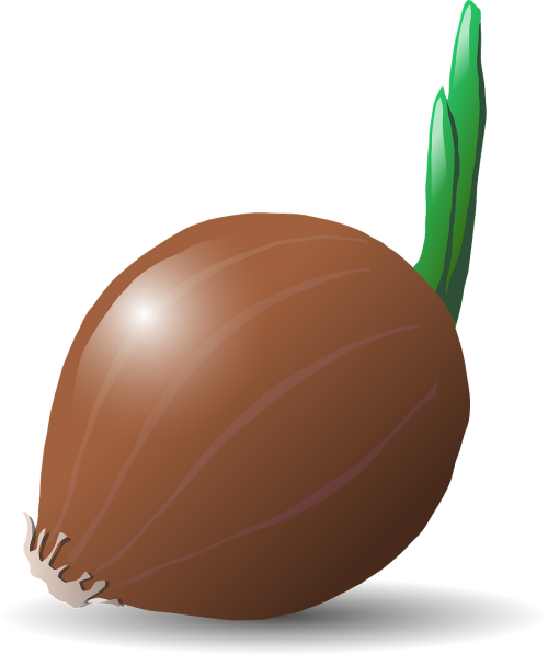 onion food vegetables