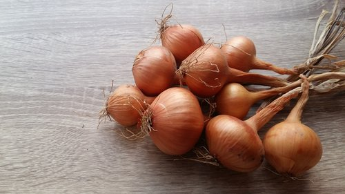 onion  recipes  food