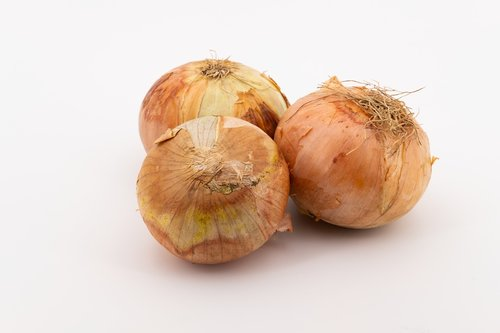 onion  vegetable onion  vegetables