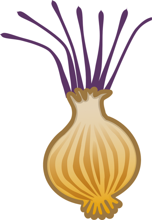 onion allium brown onion