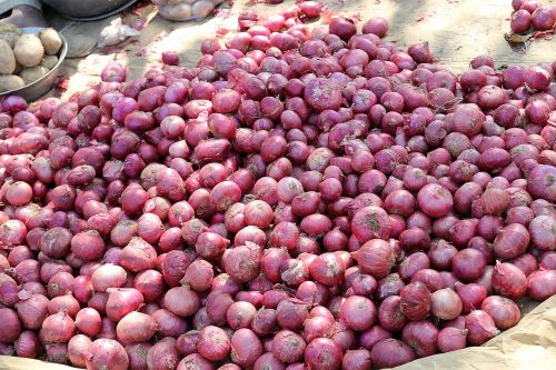 onion red onion market