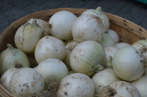 onions white vegetable