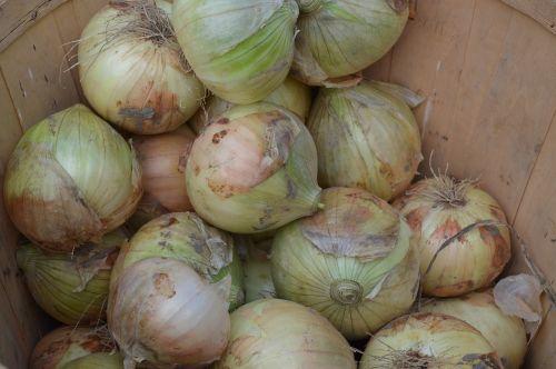 onions vegetables raw