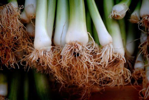 onions leek vegetables