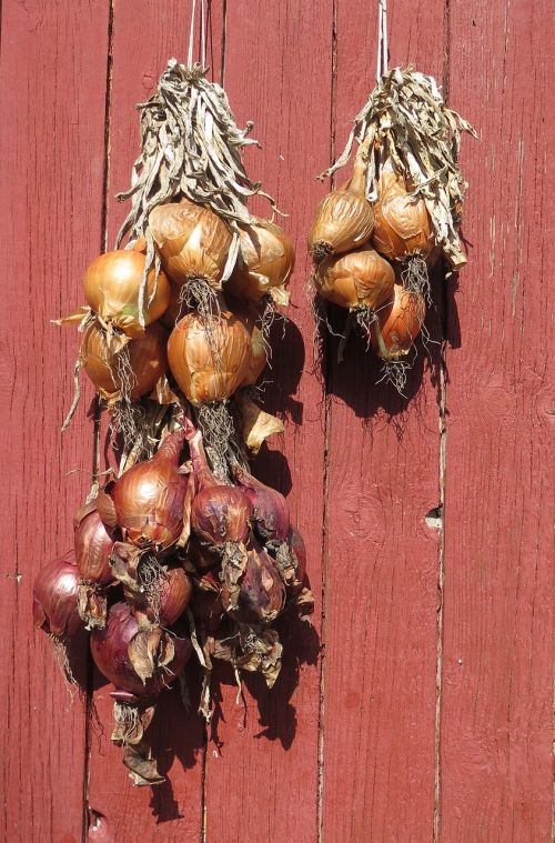 onions drying vegetable