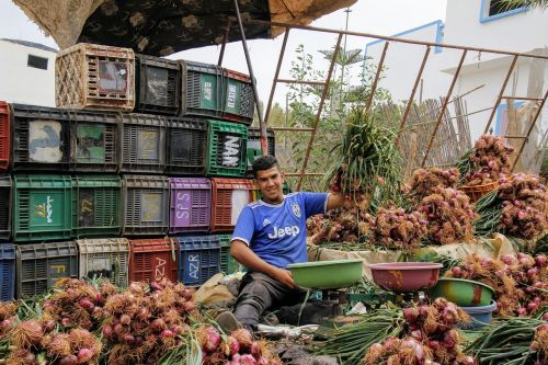 onions onion seller vegetables