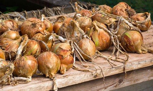 onions  vegetables  food