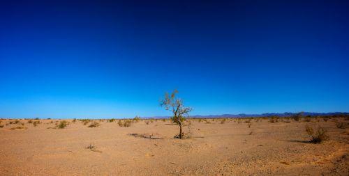 Only Tree In Desert