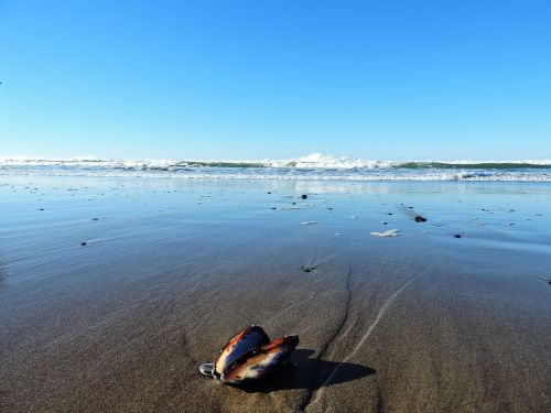 open shell lincoln city beach