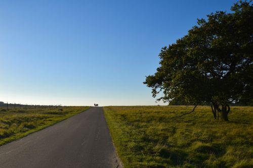 open sky landscape tree
