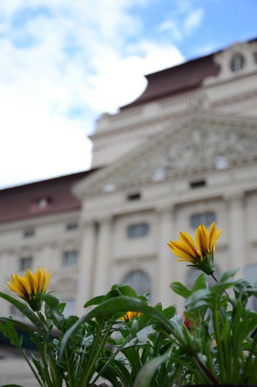opera graz flower