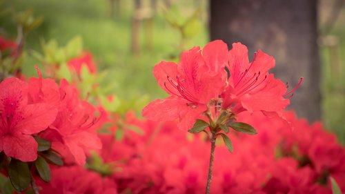 operation red  plants  affix
