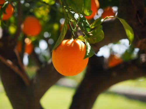 orange log tribe